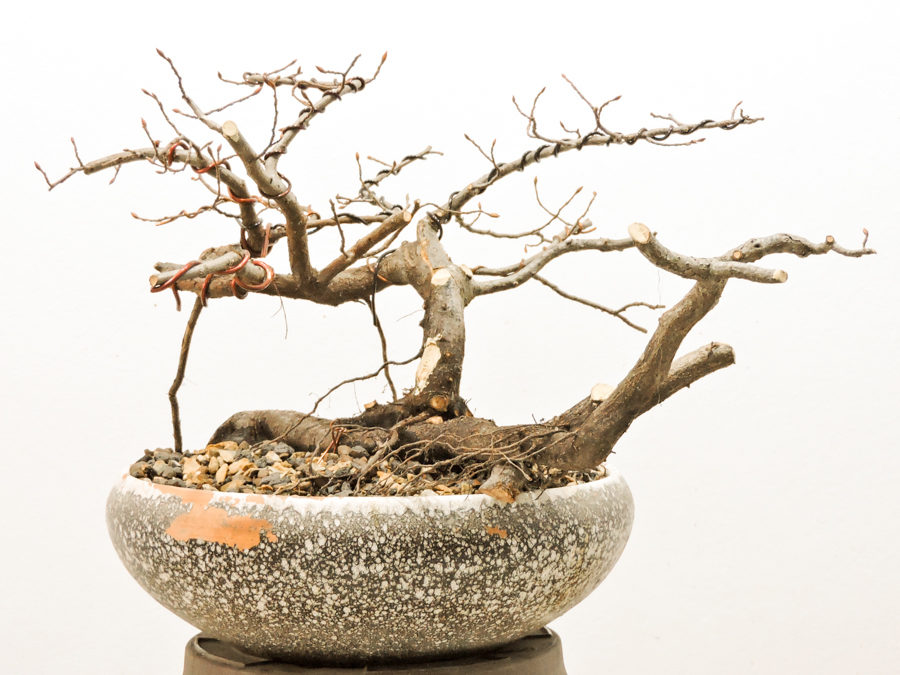 Yamadori – collected in Spring 2018 – Part I